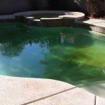Understanding swimming pool algae