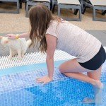 Pool safety tips for cat owners